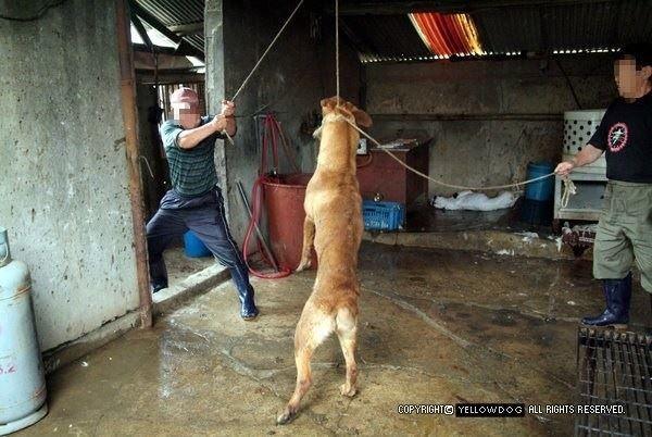 hund von chinesen erhängt