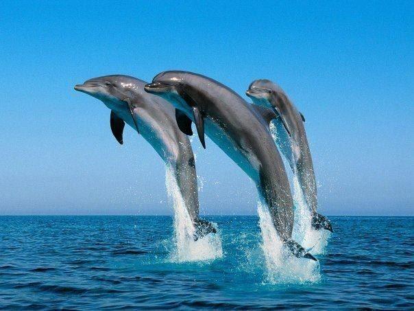 3 delfpine springend