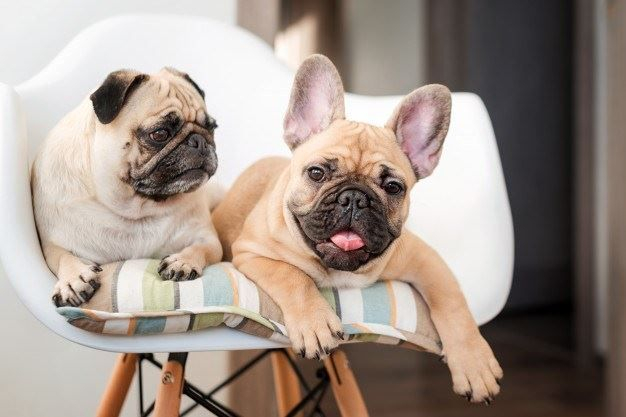 Happy pets on chair