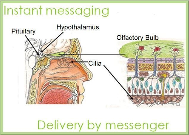 Essential oils when inhaled deliver instant mesaage to your body.