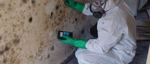 Mold Inspection Fremont CA