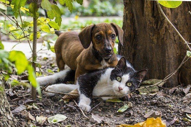 Hund und Katze beim spielen