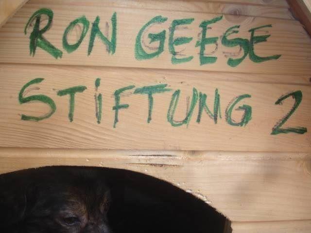 Pro Animal Welfare Hamburg. Radauti Nordrumänien Hütte2.1