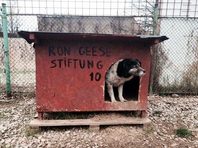 Citidogs4StreetdogsHütte10.gip