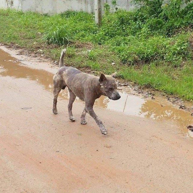 Martina MP Happy Dogs38 weisser hund