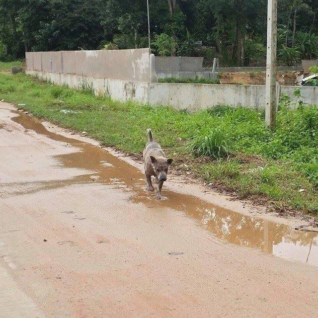 Martina MP Happy Dogs40 weisser hund
