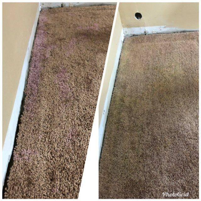 Custom Colour Carpets & Rugs, Bleach Spot Repair, Carpet Dyeing