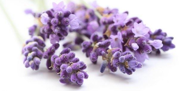 Aromatherapy homemade lavender doterra young living oils