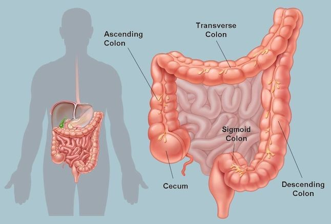 image of colon, colon health, colon hydrotherapy