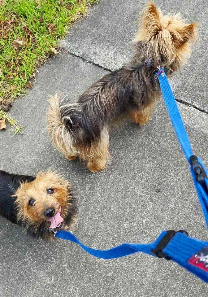 Adore All Pet Care Service's dog walking offers, 30, 45 and 60 minute walks week days