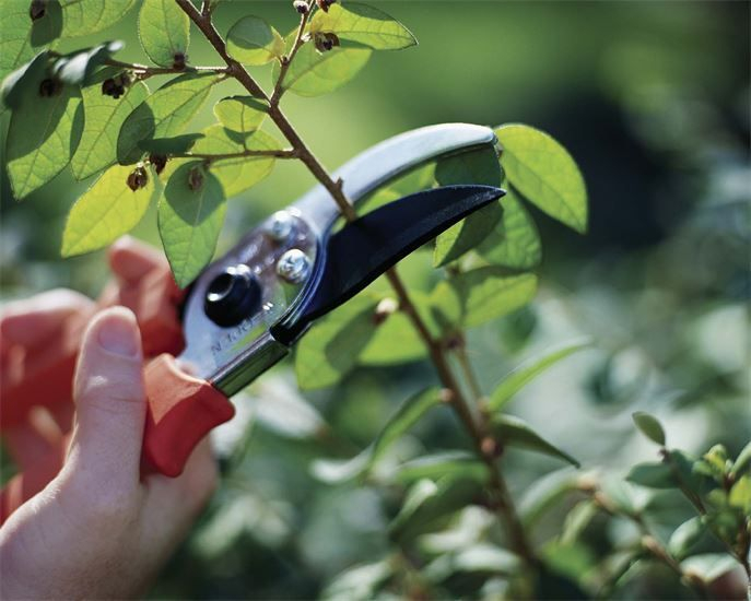 pruning is a important part of gardening and at oddjobs we provide a professional pruning service