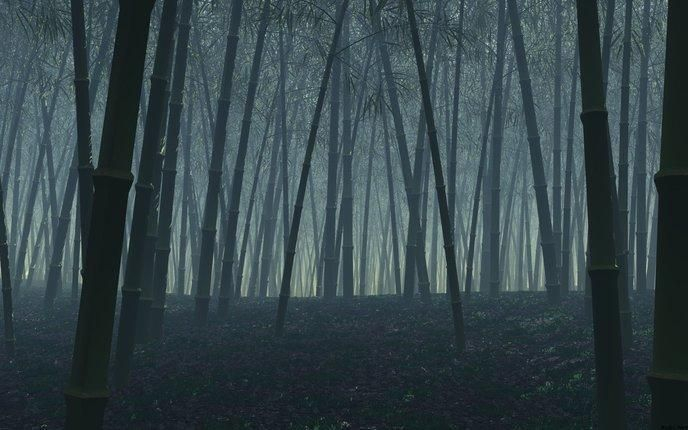 La forêt de bambou Hei Zhu Gou (Chine)