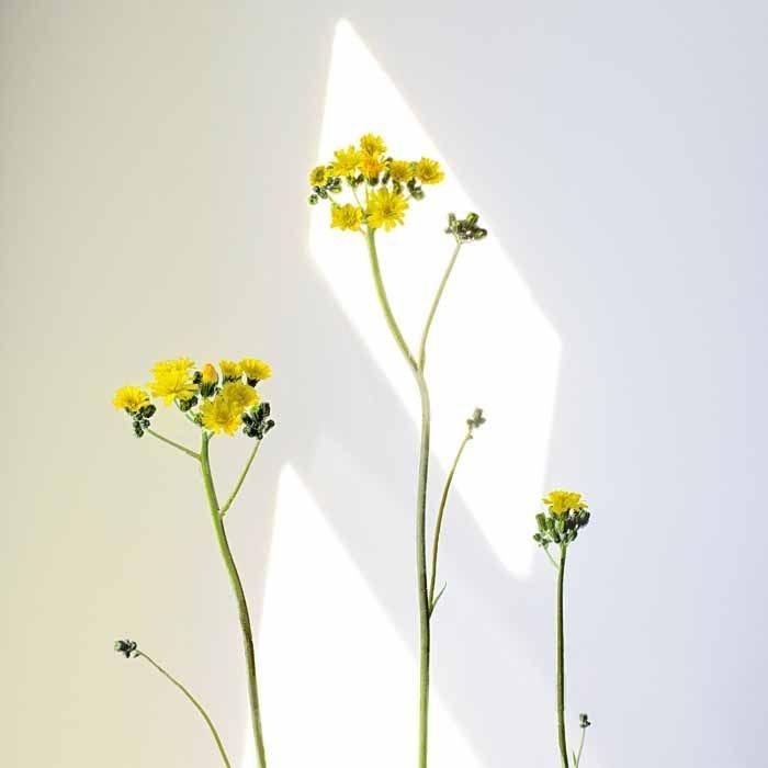 Simplicity by Sara Harley