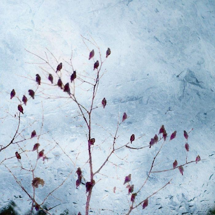Rainy Day Blues by Sara Harley
