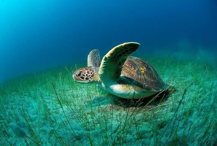 schildkröte am meeresgrund