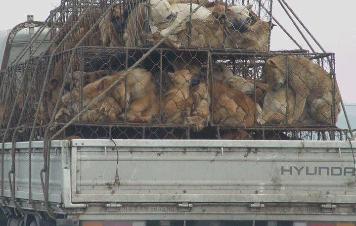 hund auf transporter