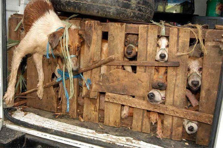 china ... hunde