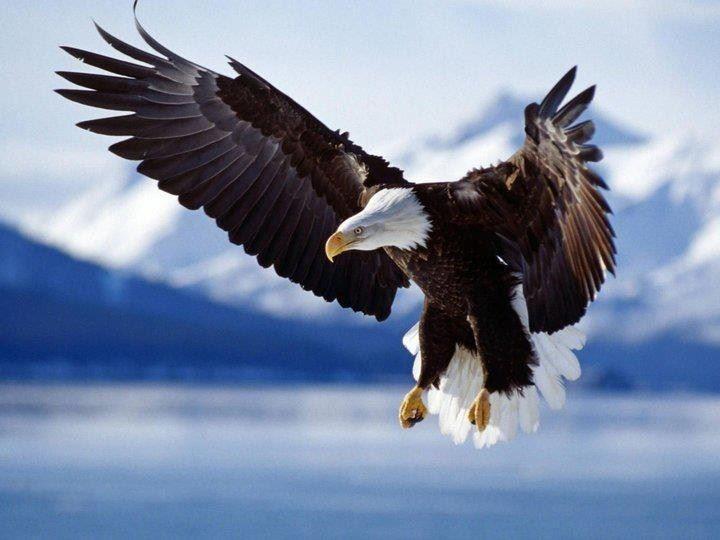 Nur die Freiheit ist Artgerecht.