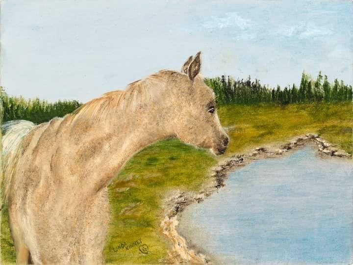 Babydoll, Pet, Horse, Palomino, Pond, Water, Texas, Summertime, Blue, Tan