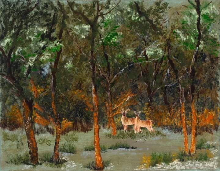 Deer, Grazing, Oak, Trees, Summer, Quiet