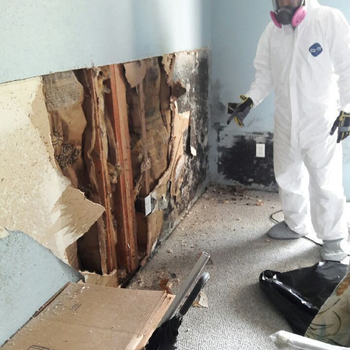 Mold testing, mold consultant, mold remediation, my Consultant, mold removal