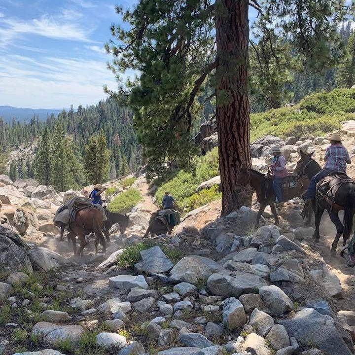 Come ride mules into the forest with Minarets Pack Station.  Minaretspack.com