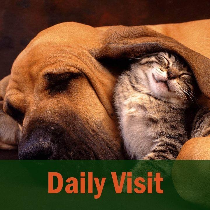 Cuddling Dog and Cat
