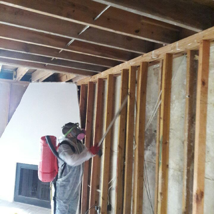 Mold Remediation, mold consulting