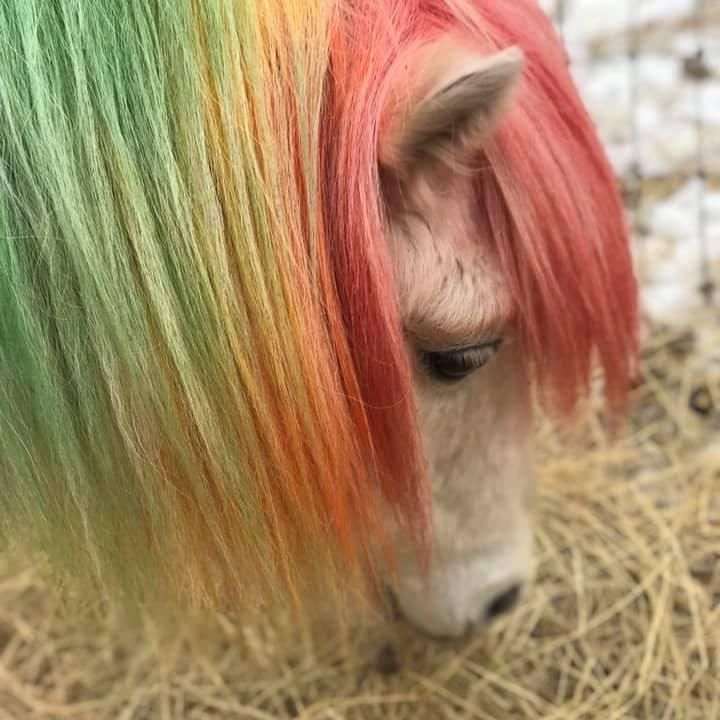 Small pony painted mane