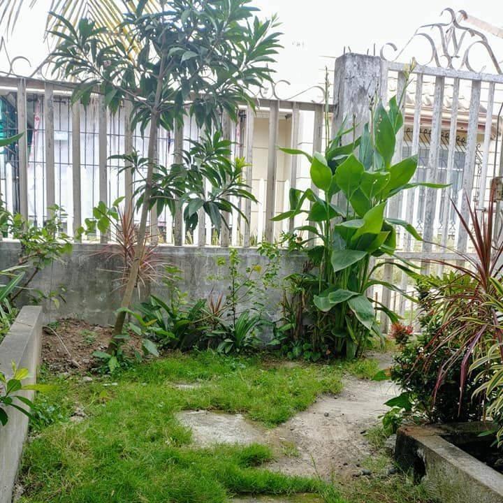 tropical garden, tropical, tropical plants, garden ideas for small spaces, garden ideas for tropical homes, garden ideas for urban homes