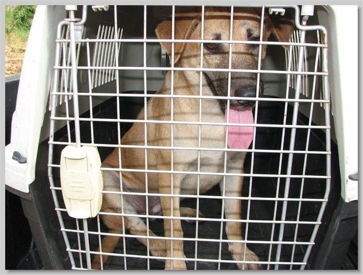 hundehilfe thailand kastr. hündin -pumpui-