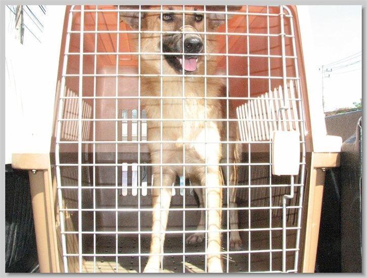 hundehilfe thailand kastr. hündin -jeab-