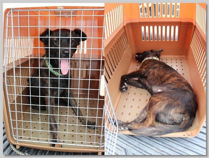 hundehilfe thailand kastr. hündin -choi nr. 27 am 02.10.13