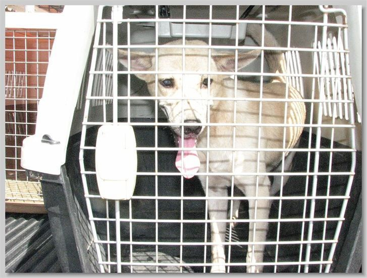 hundehilfe thailand kastr. hündin -tiny-02.07.13