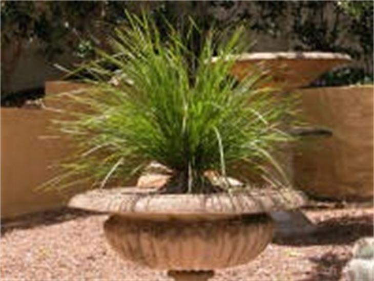 tanika native grasses