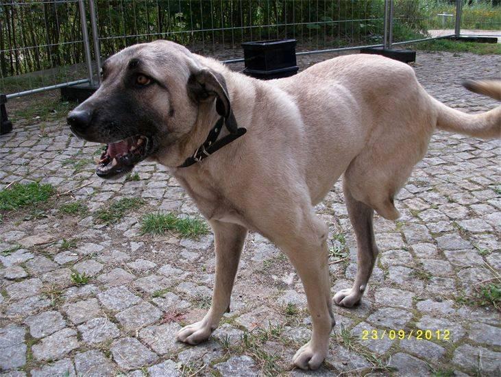 brauner hund im korb