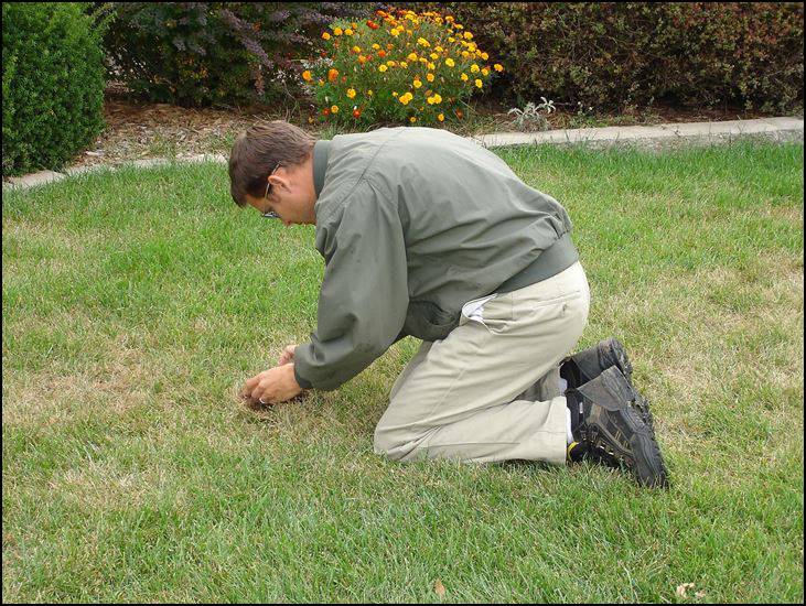 pest control, insects, lawn inspection