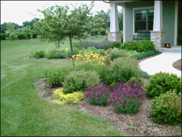 compost tea, healthy plants, organic fertilizer