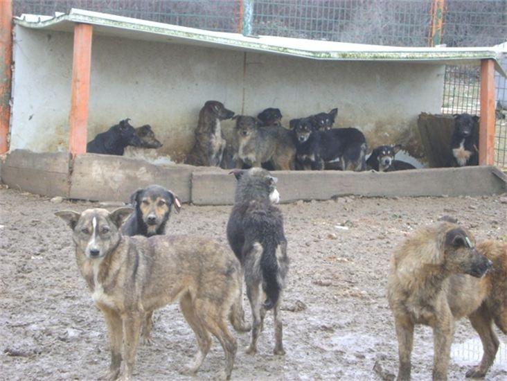 Tierheim Ploiesti Hundhütten alt