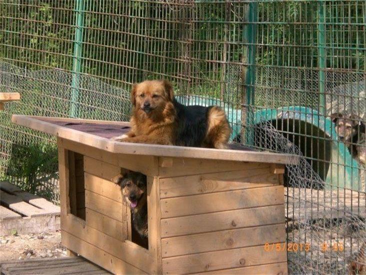 Tierheim Ploiesti Hundehütten3