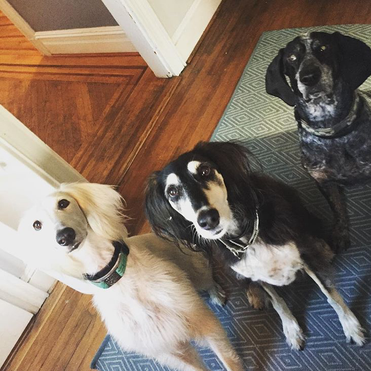 Photo of three dogs looking at the camera