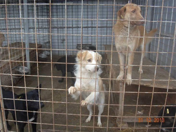 Streunerparadies Rettendes TH für Rumäniens Strassenhunde5