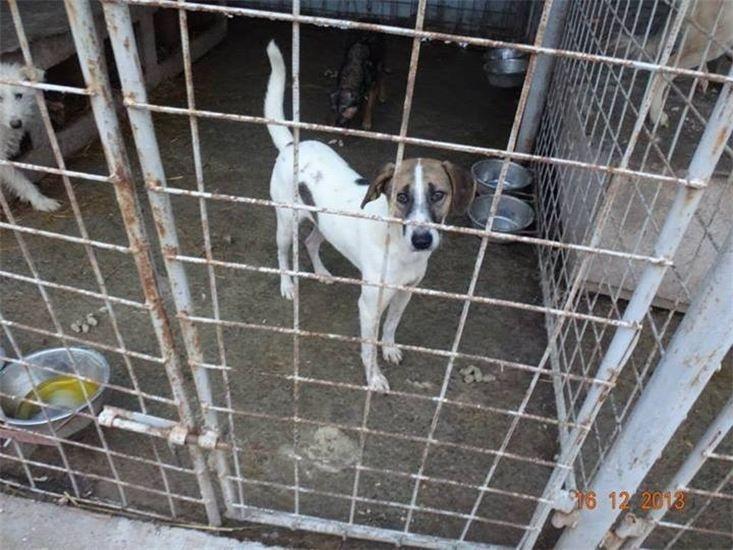 Streunerparadies Rettendes TH für Rumäniens Strassenhunde6