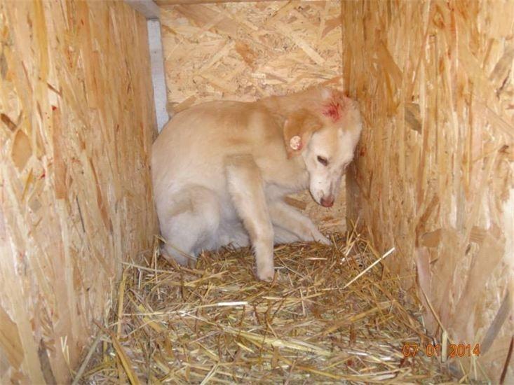 Streunerparadies Rettendes TH für Rumäniens Strassenhunde1