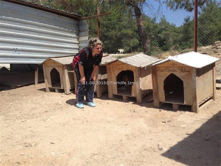 Tierheim -Sopen- in Izmir Türkei. Ron Geese Stiftung. Das Recht der Tiere. 1
