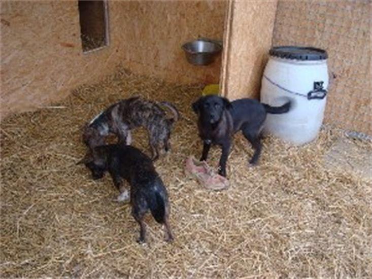 Streunerparadies Rettendes TH für Rumäniens Strassenhunde8