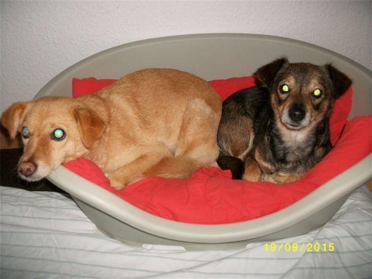 Mini aus Bulgarien (links) und Bella, fühlen sich richtig wohl bei uns.