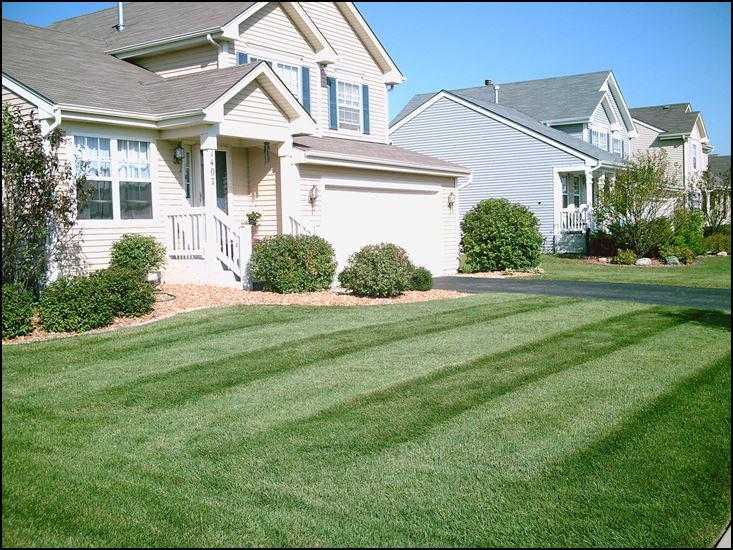 Organic lawn care, organic fertilizer, organic weed control, organic grub control