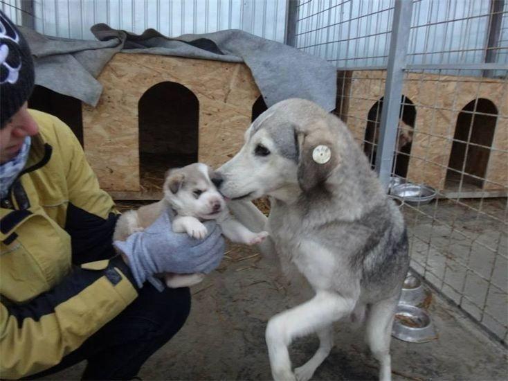 Streunerparadies Rettendes TH für Rumäniens Strassenhunde4