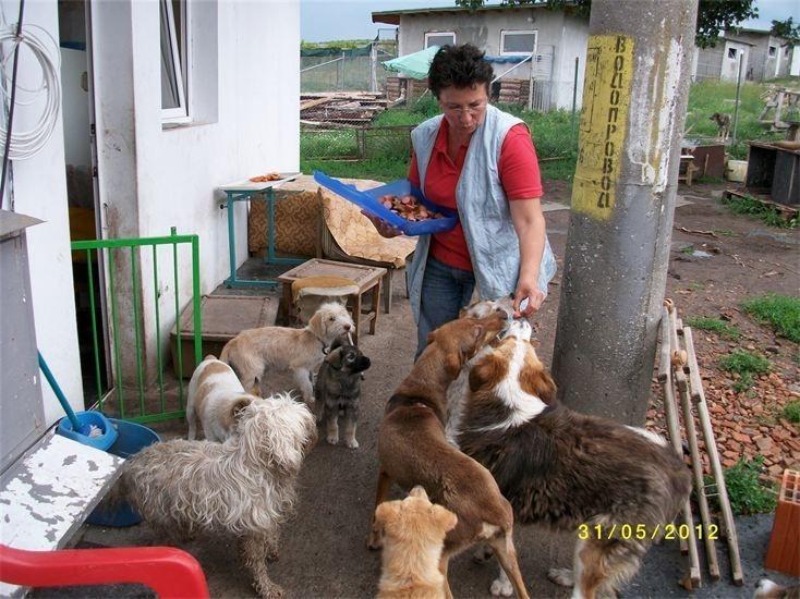 Besuch im Tierheim / Burgas Bulgarien.
